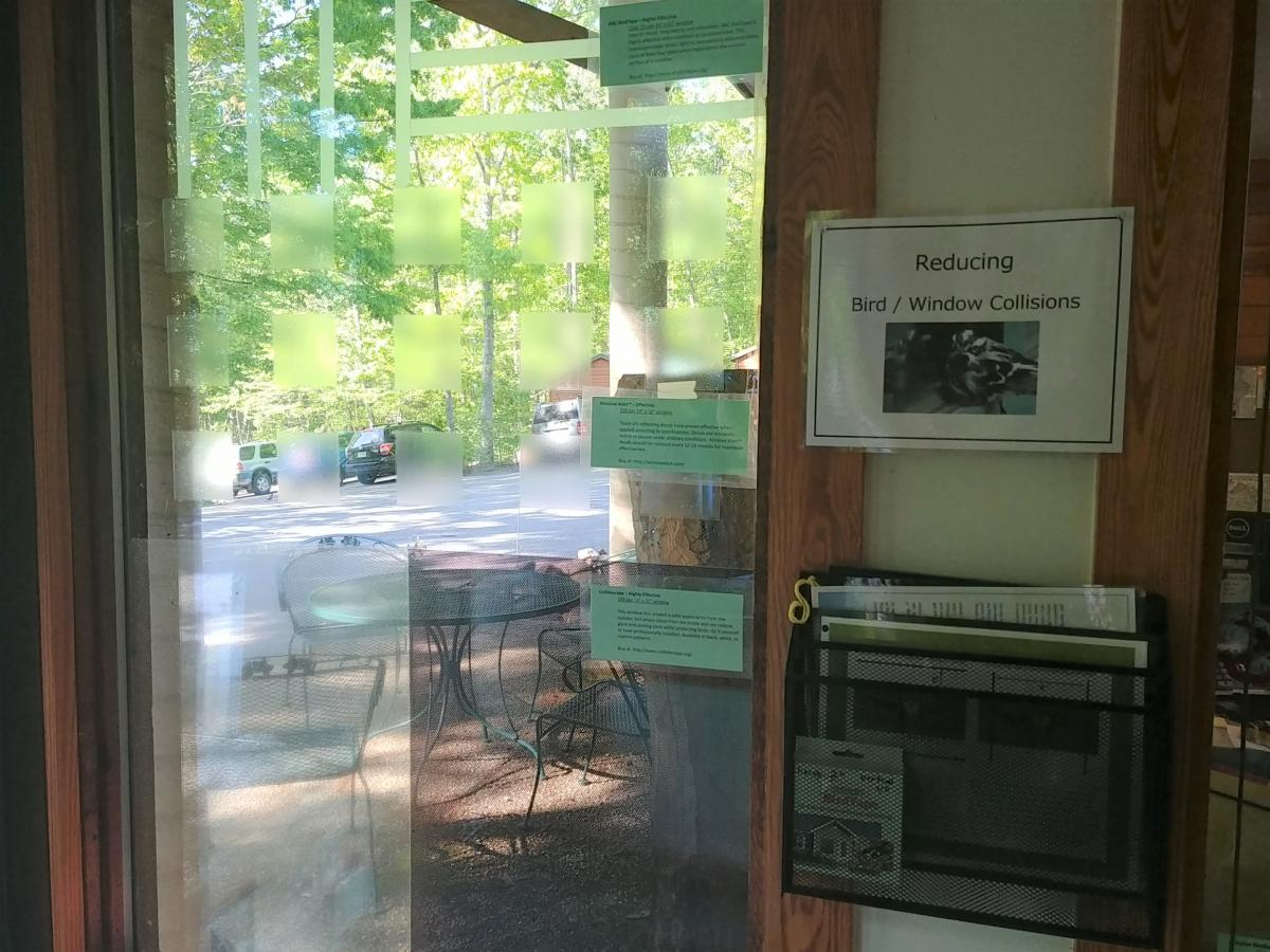 Keeping Your Windows Safe for Birds | The Wildlife Center of