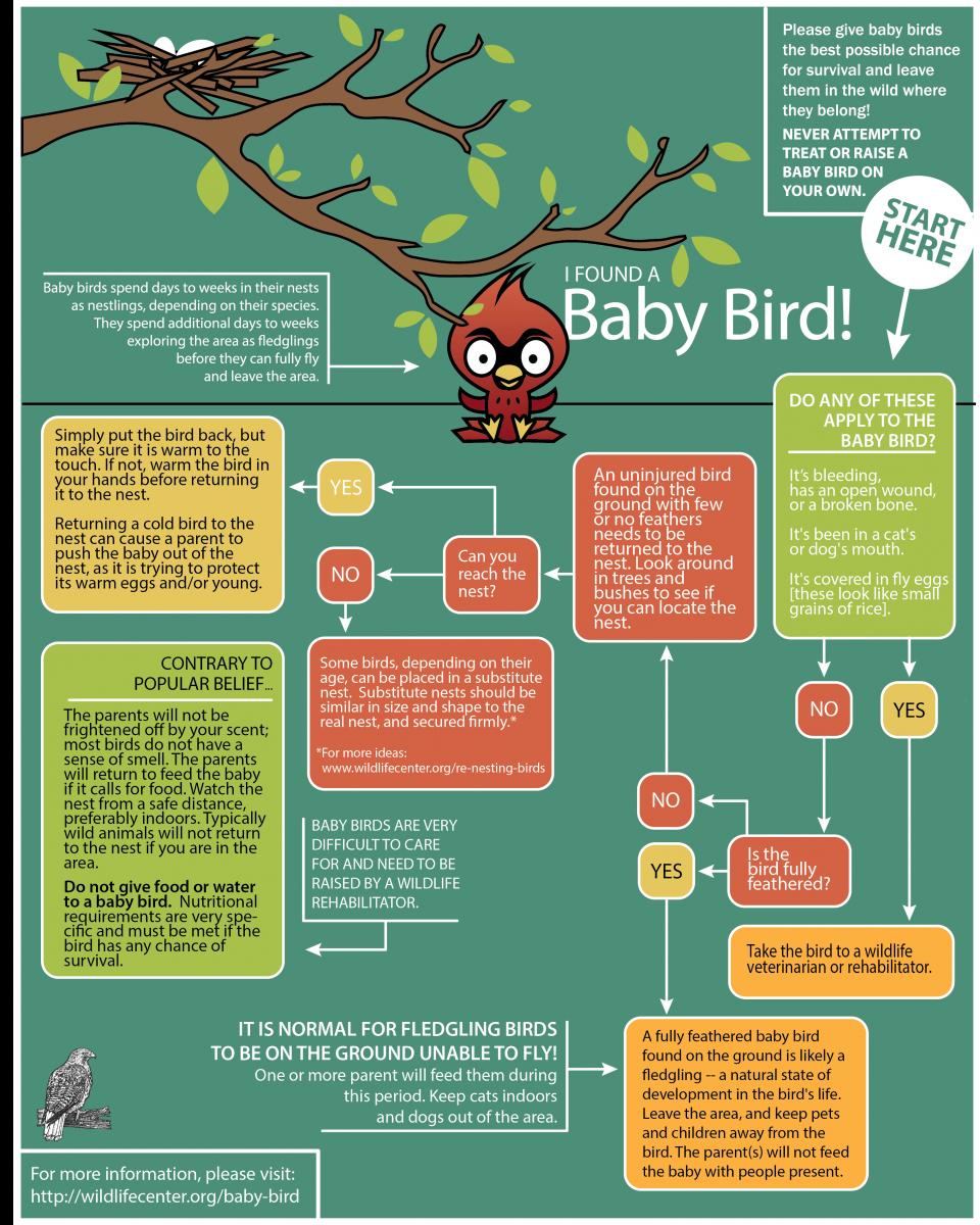 Baby Bird   The Wildlife Center of Virginia