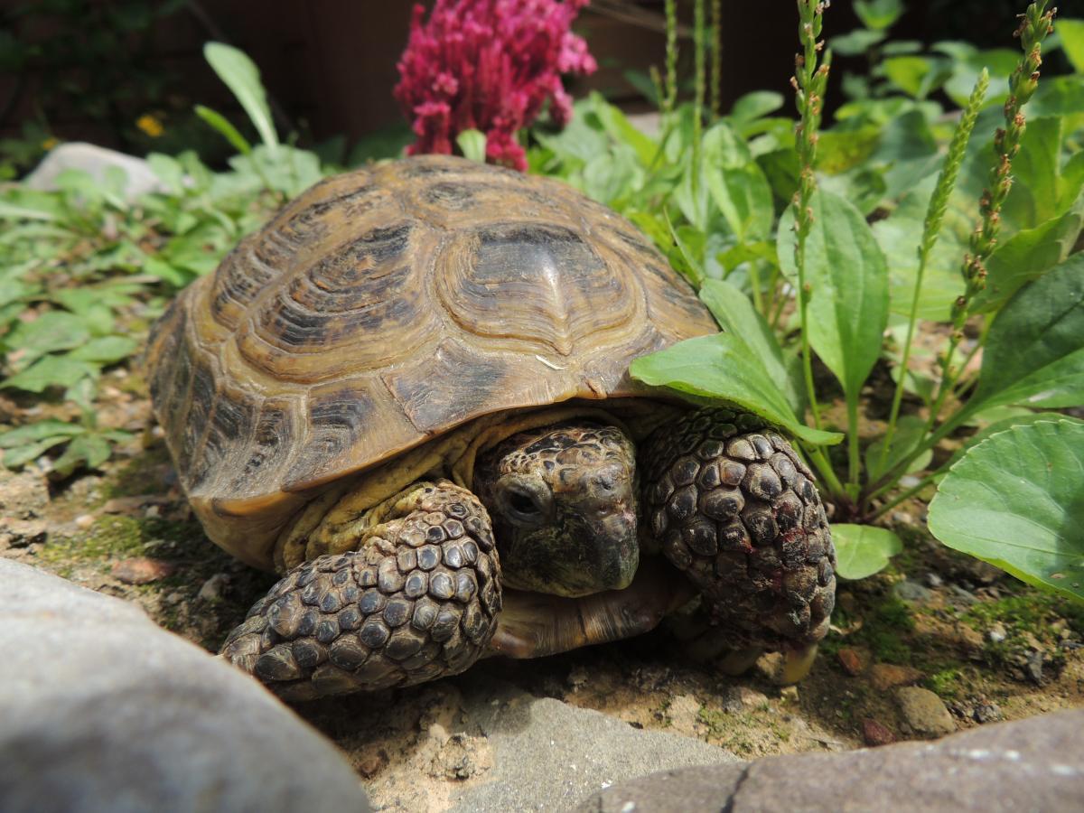 World Turtle Day 2018   The Wildlife Center of Virginia