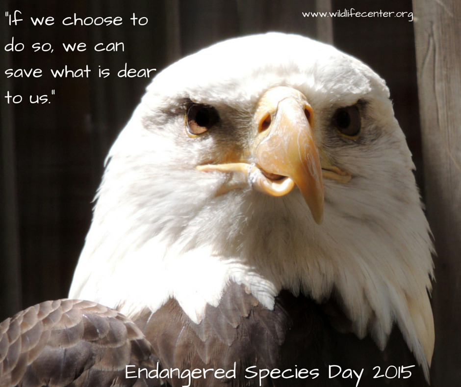endangered animals photo essay