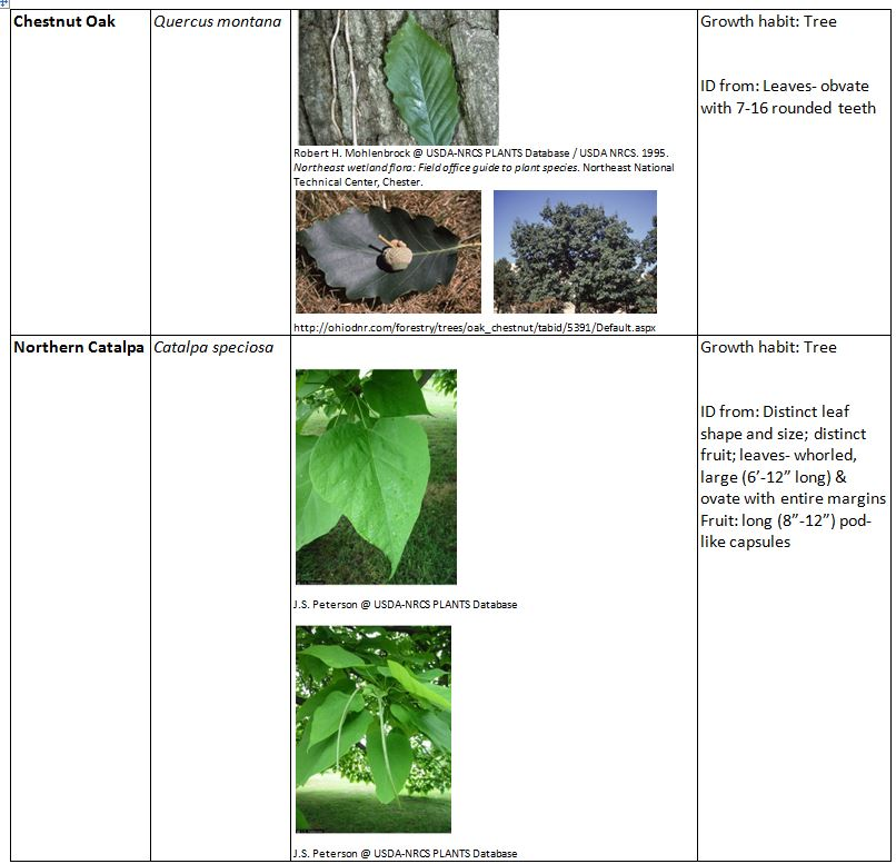 What plants can be found in the bear habitat pictures to for Code habitat