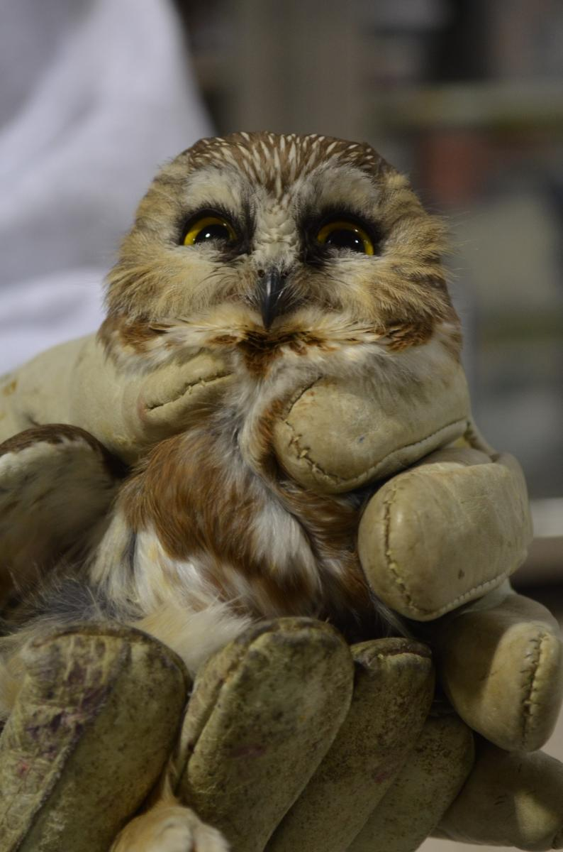The Cute and the Fluffy | The Wildlife Center of Virginia