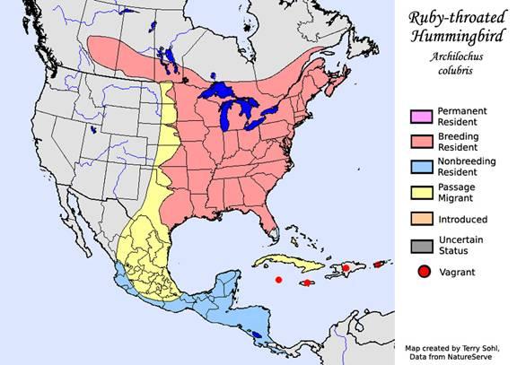 Ruby-throated Hummingbirds Blog | The Wildlife Center of