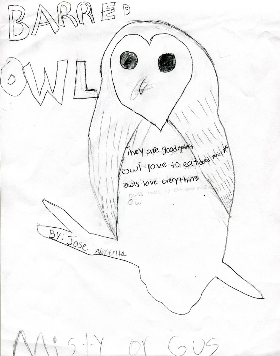 cam in the classroom  owl poetry