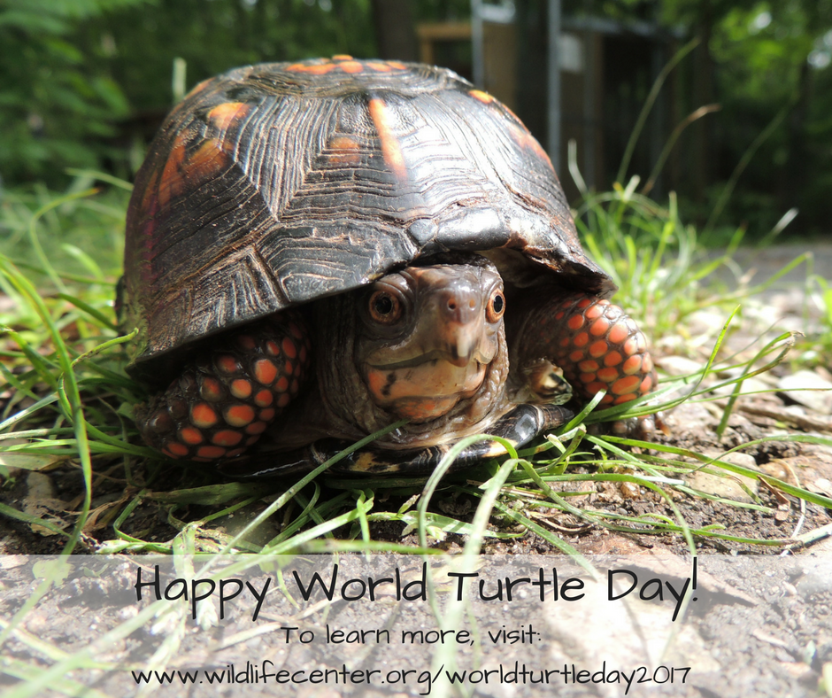 World Turtle Day 2017 | The Wildlife Center of Virginia