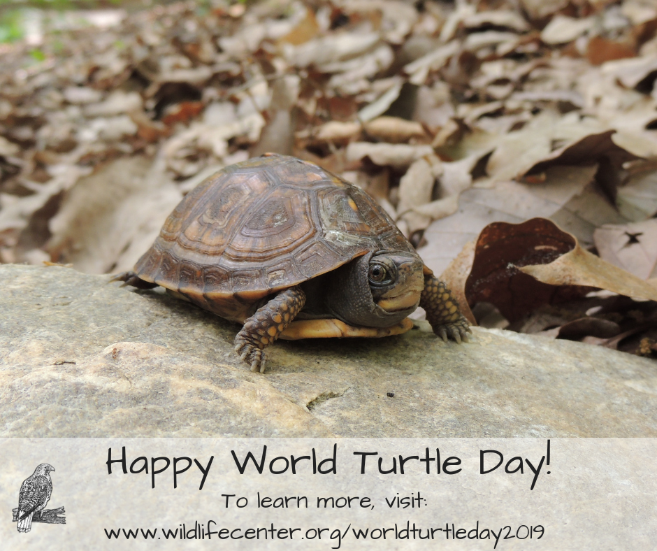 World Turtle Day 2019 | The Wildlife Center of Virginia