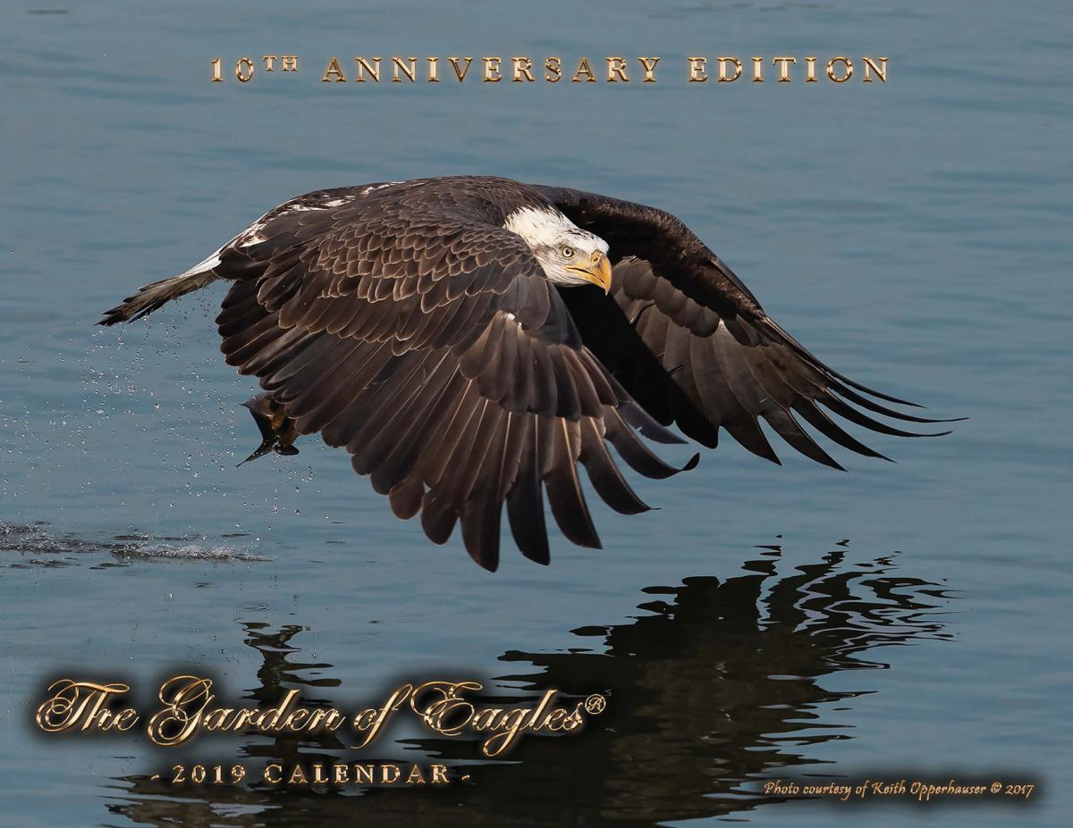Eagles Calendar 2019 Garden of Eagles 2019 Calendar | The Wildlife Center of Virginia