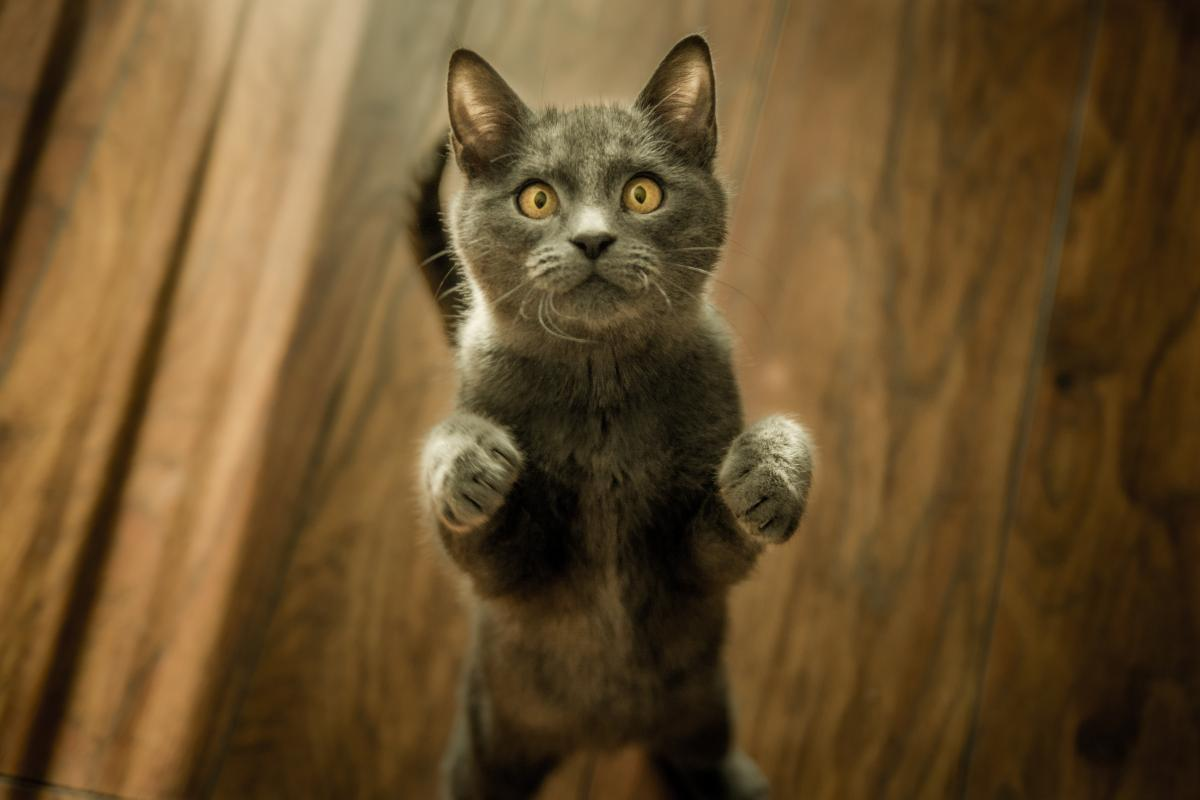 Bringing Your Cat Indoors