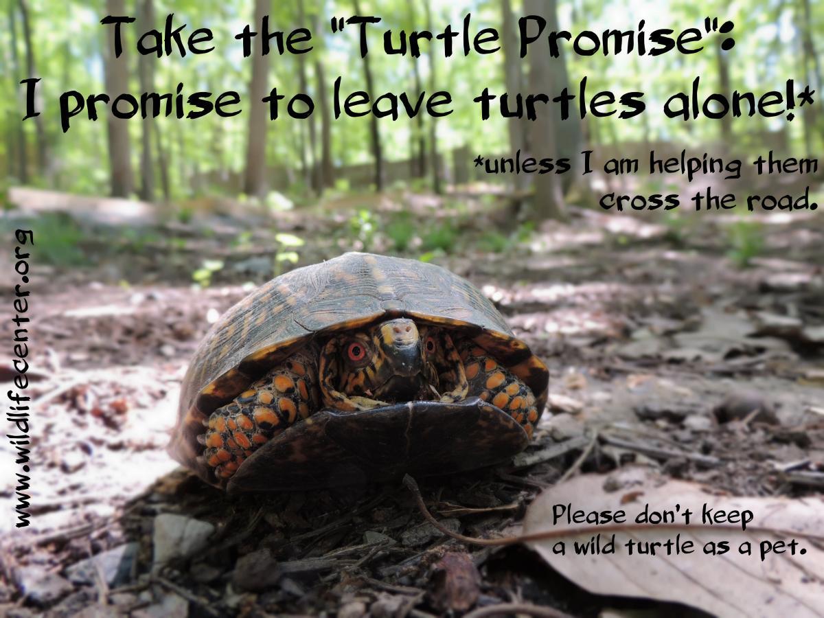 World Turtle Day 2016 The Wildlife Center Of Virginia