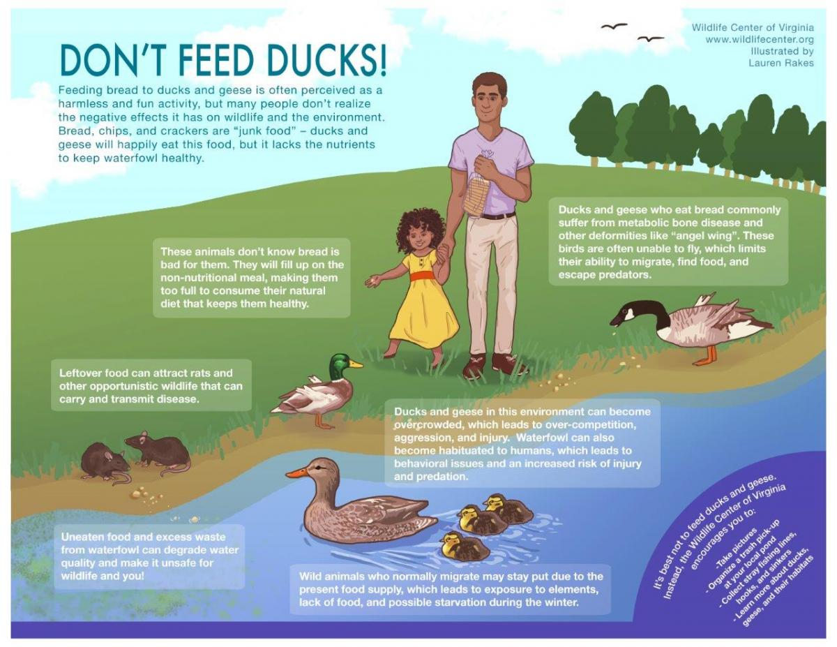 Image result for what should you feed ducks
