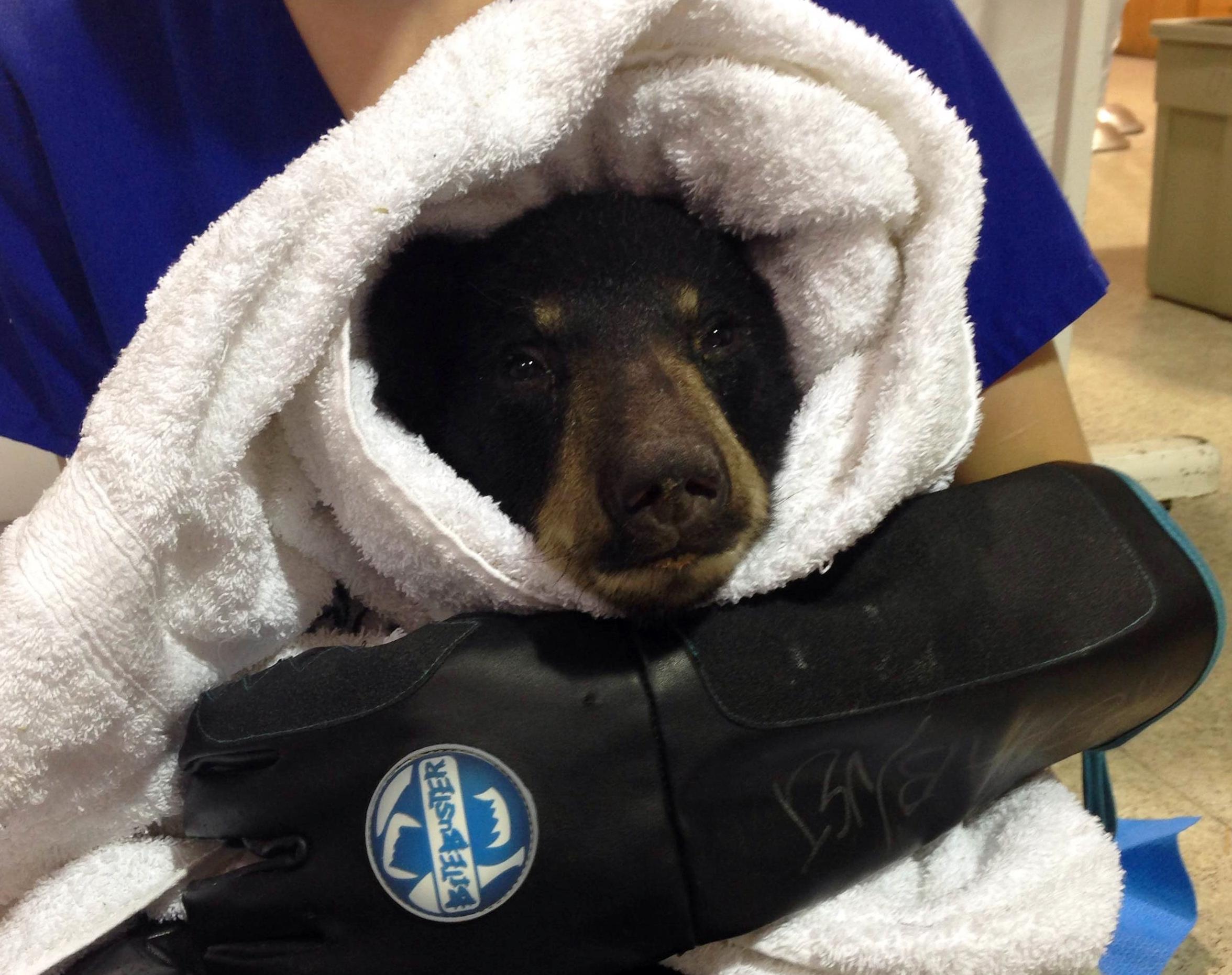 Bear cub dating