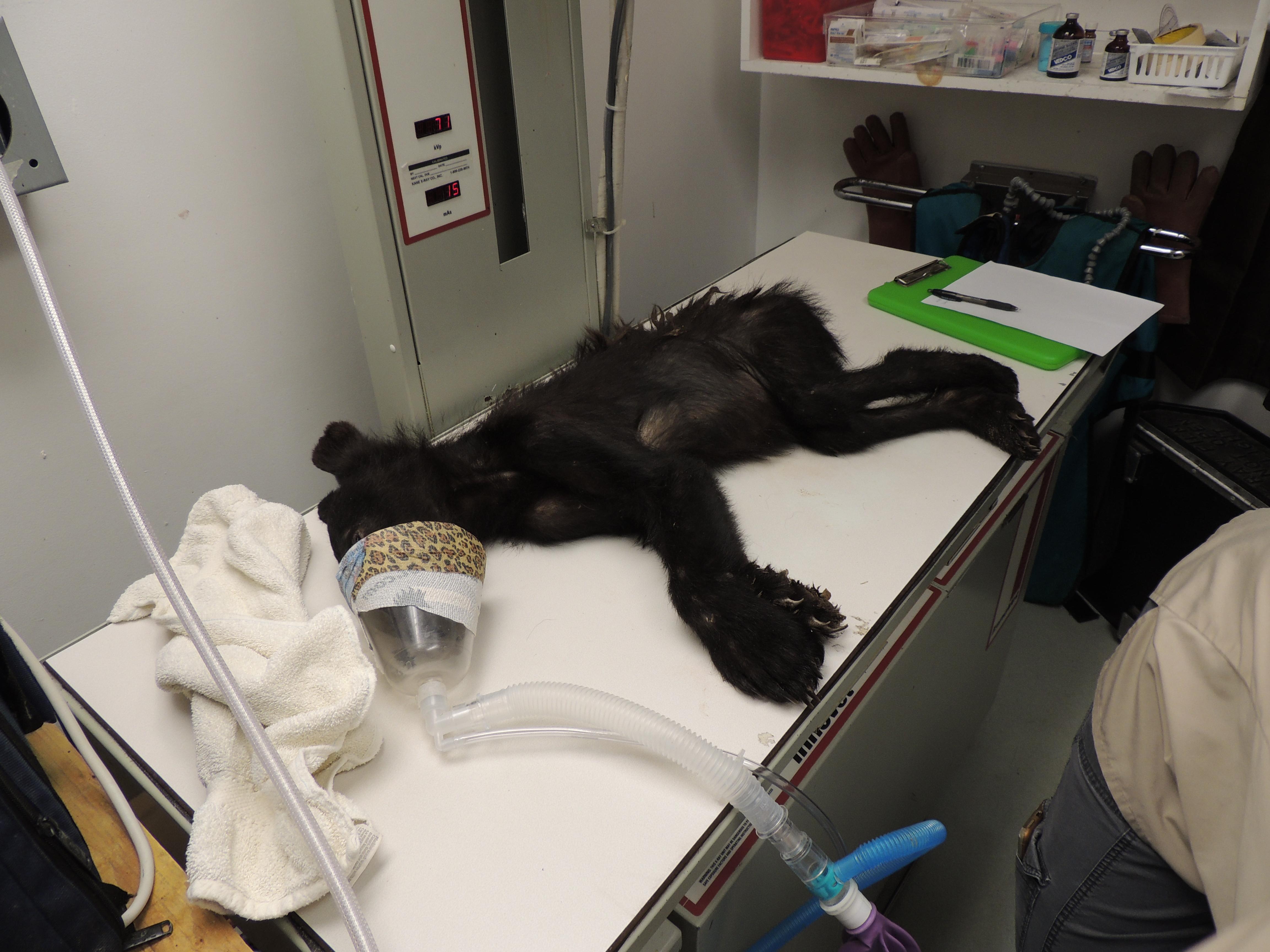 Current Patients | The Wildlife Center of Virginia