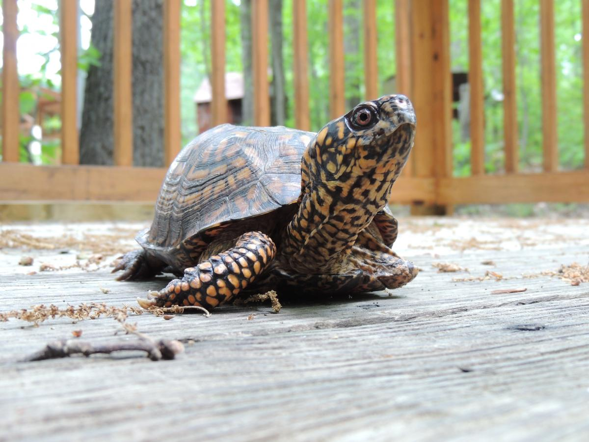 turtle releases 2014 part two the wildlife center of virginia