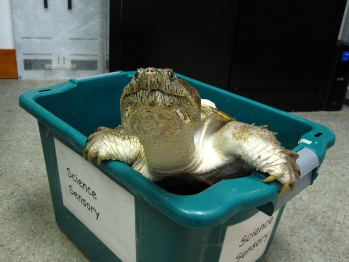 Need help in figuring out how you should celebrate World Turtle Day?