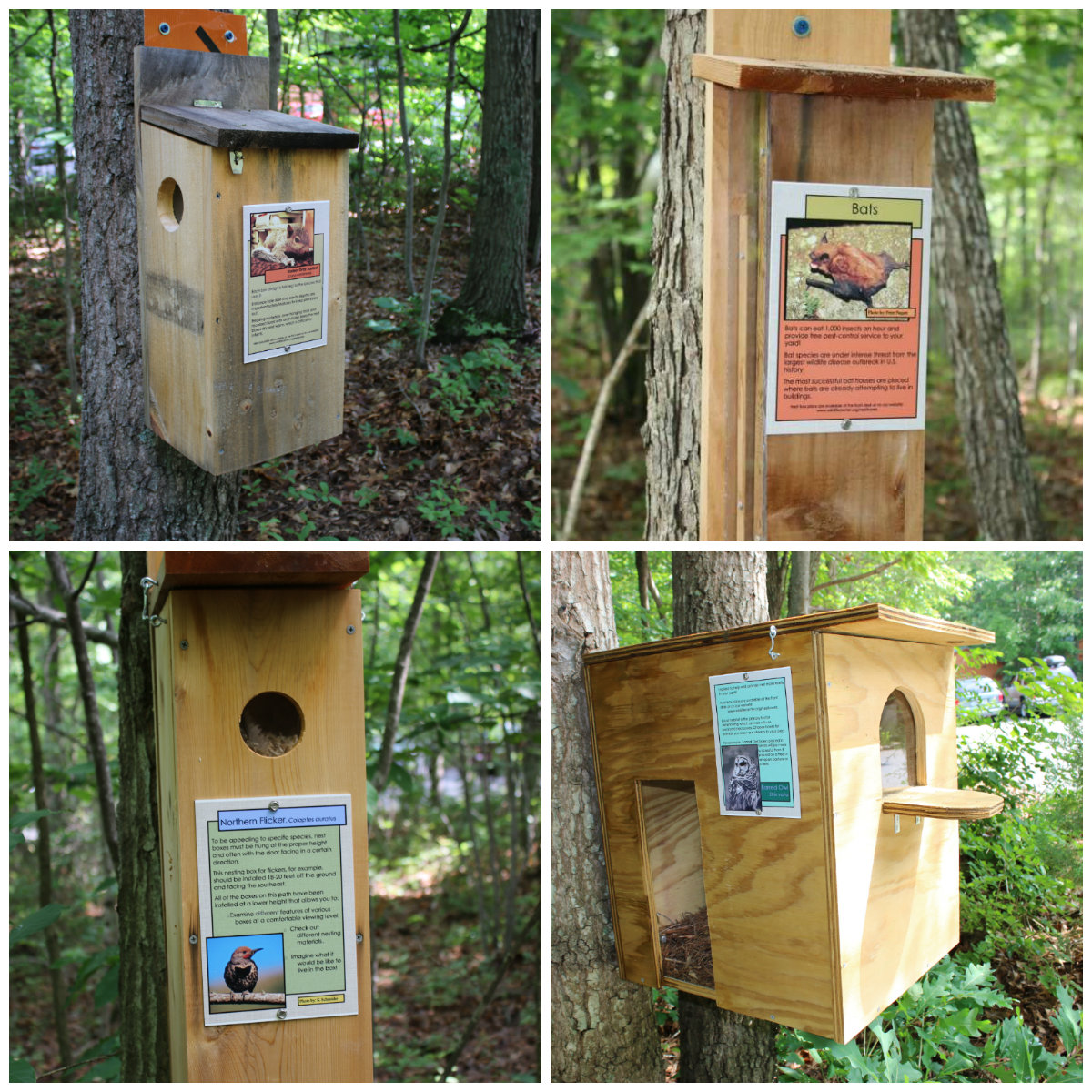 Nestboxes The Wildlife Center Of Virginia